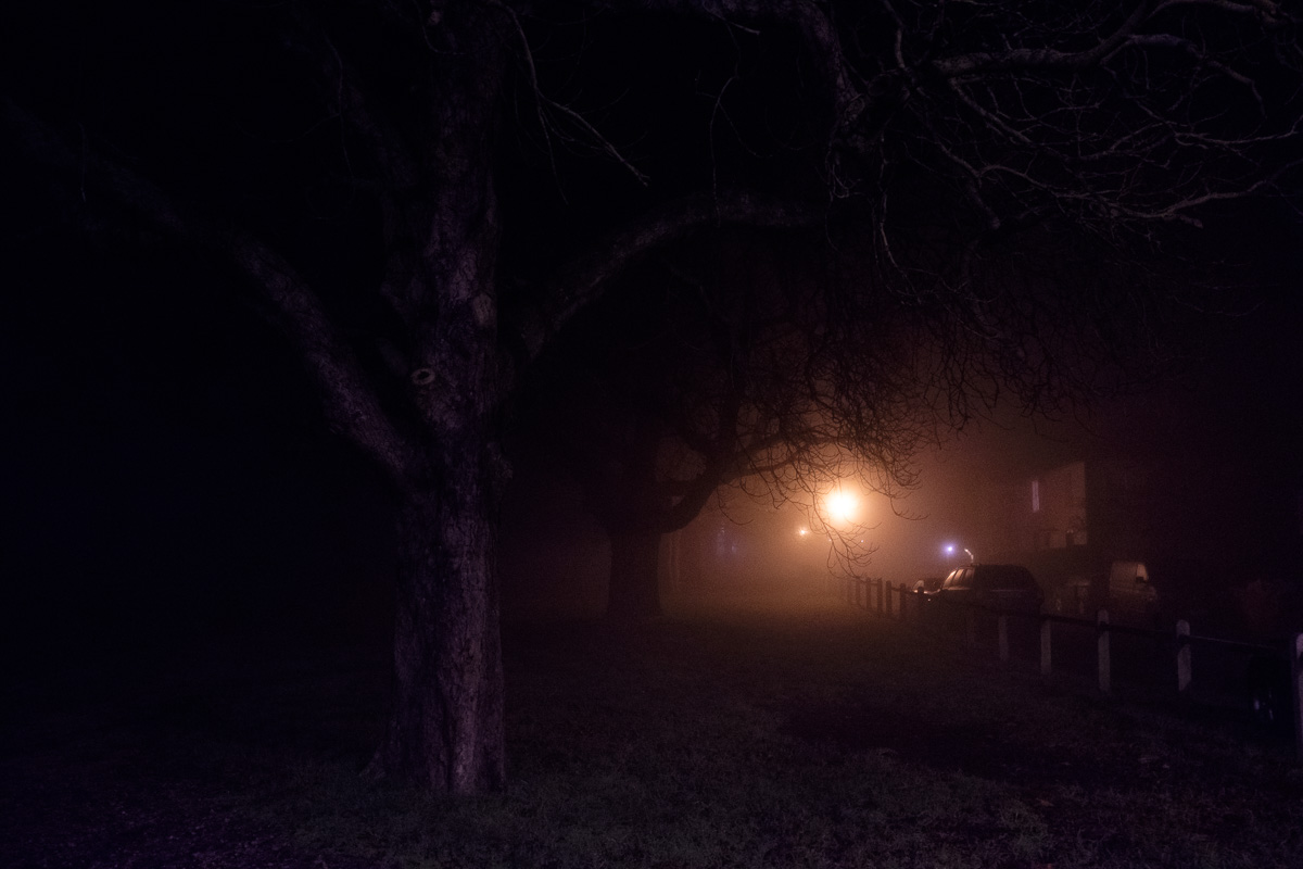 Trees in the night, shrouding a light in the distance.