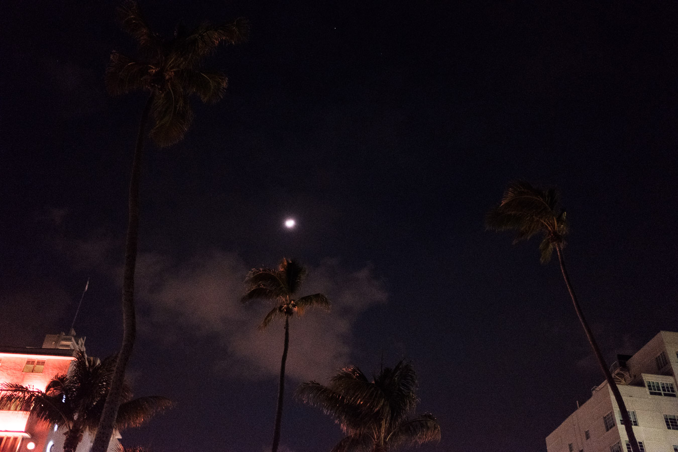 Palm trees against the night sky